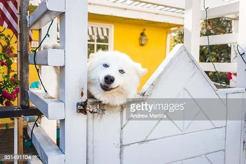 Dog excited for visitors