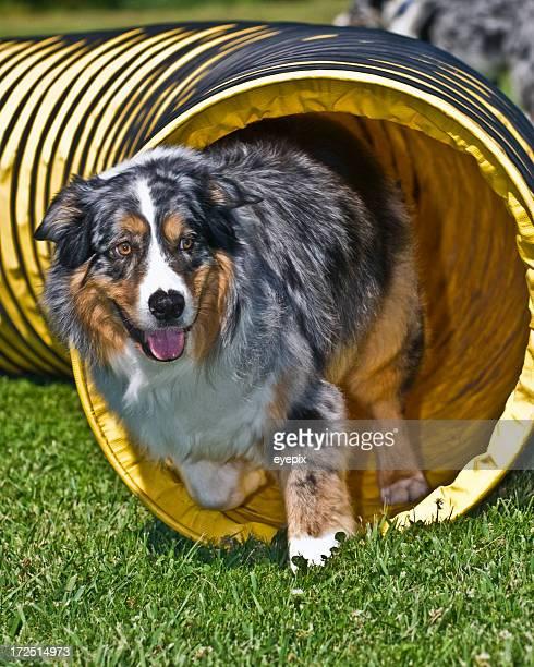 Hund Verlassen Sie den tunnel