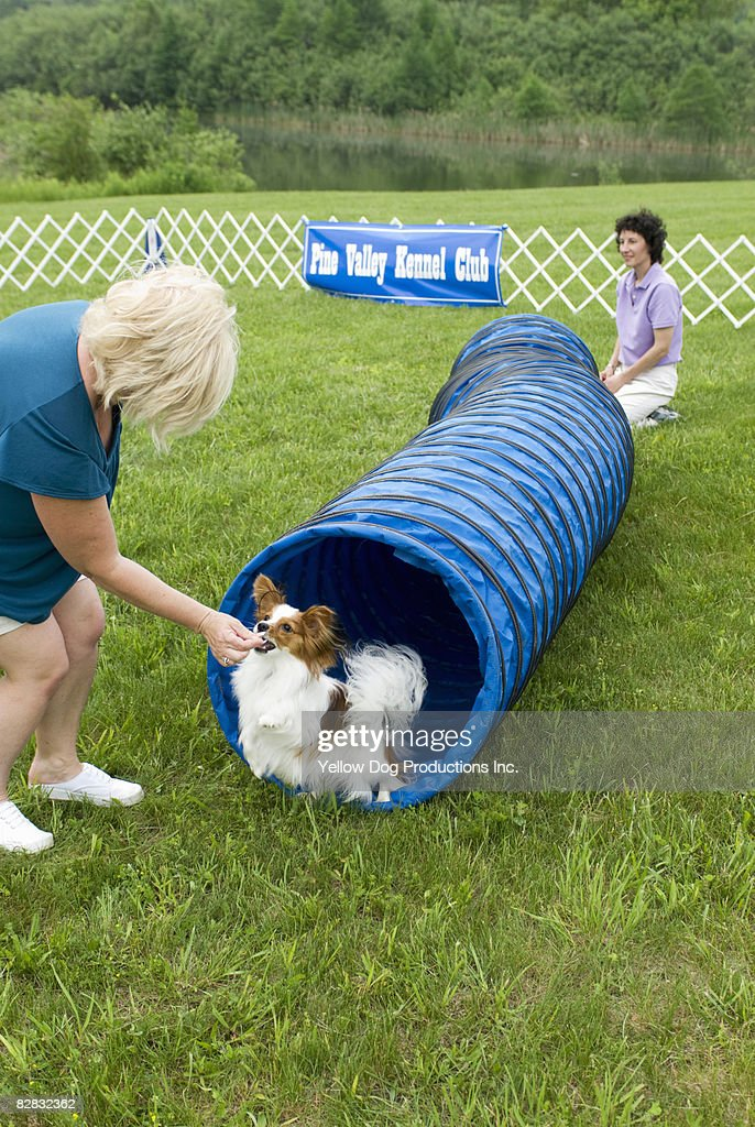Dog exiting tunnel in agility course : Stock Photo