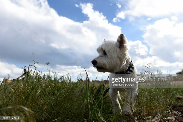 A dog explores the new USMC CPL David M Sonka Dog Park on June 14 in Parker Colorado The Town of Parker opened its long awaited dog park and...