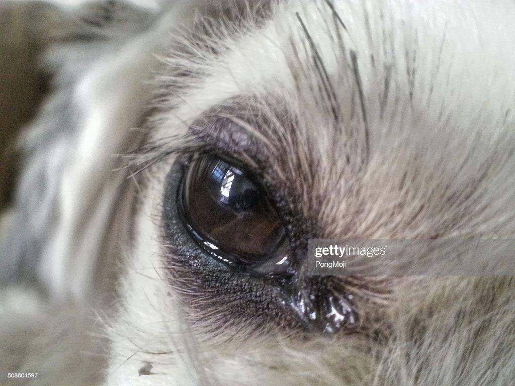 Cão Olho de reflexos : Foto de stock