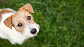 Dog face - cute happy pet puppy looking in the grass