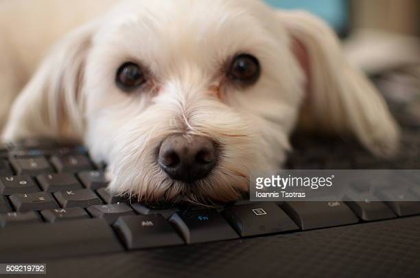 Dog face on black keyboard