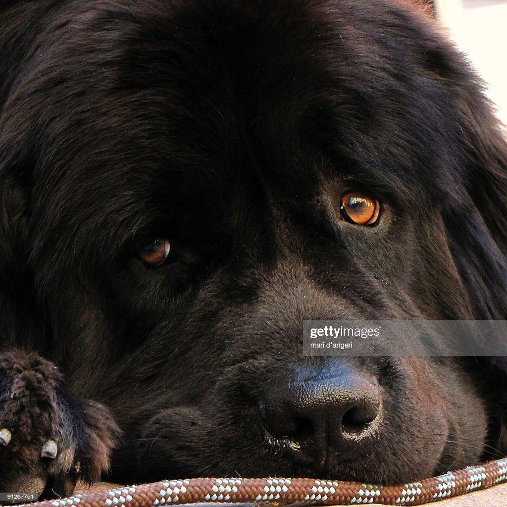 Dog face  : Stock Photo