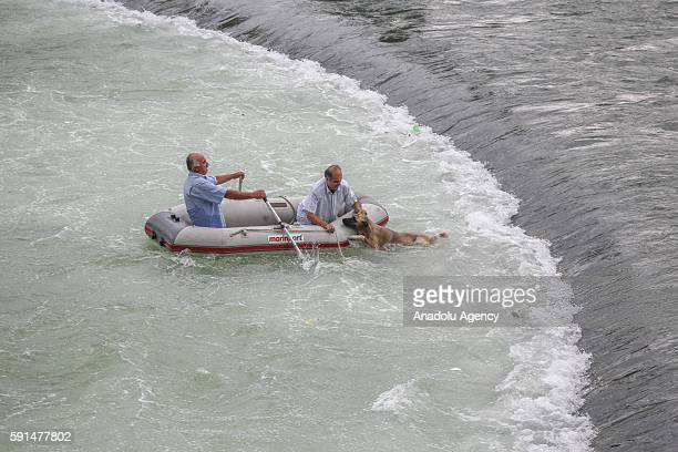 A dog fell into the water is being rescued by two men on a inflatable boat on the Kelkit River in Tokat Turkey on August 17 2016