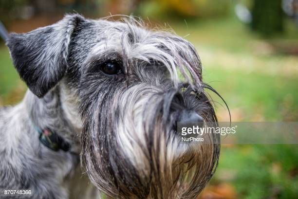 Dog festival and competition dedicated to World Animal Day is celebrated in Kiev Ukraine on November 5 2017