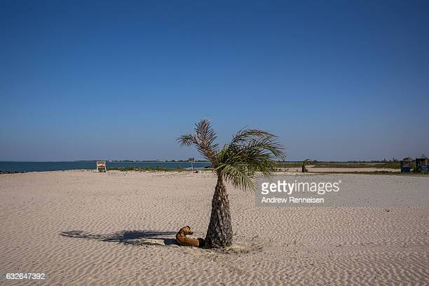 Dog finds shade on an empty beach outside the Ocean Bay Resort on January 24, 2017 in Cape Point, The Gambia. Many popular travel destinations still...