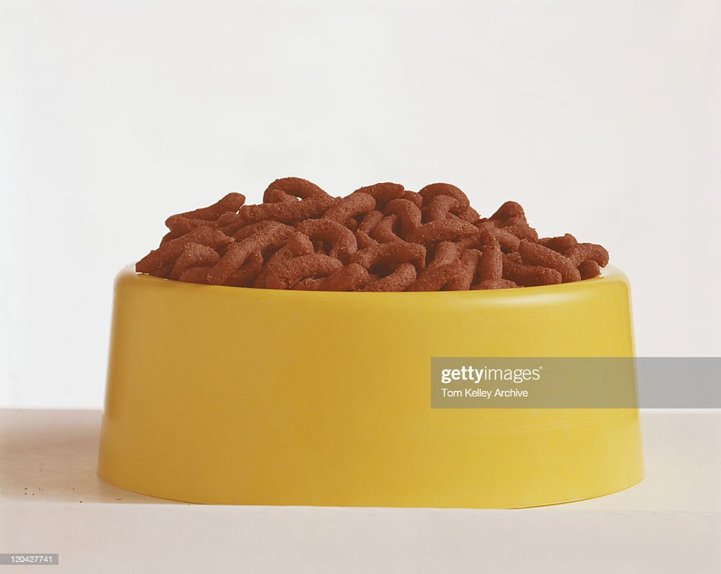 Dog food in dog bowl, close-up : Stock Photo