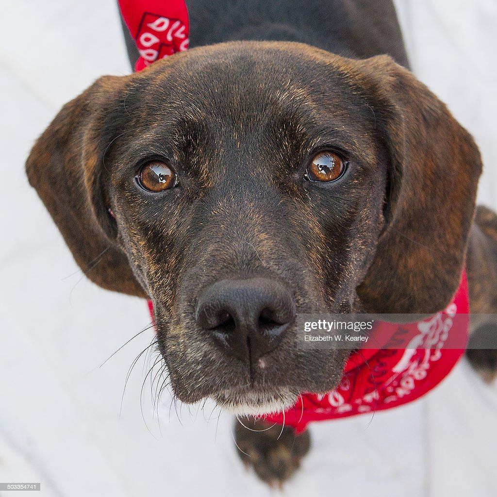 Dog for adoption : Stock Photo