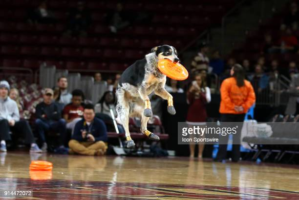 A dog from the K9 Crew Disc Dog Team performs at halftime the during a college basketball game between Georgia Tech Yellow Jackets and Boston College...