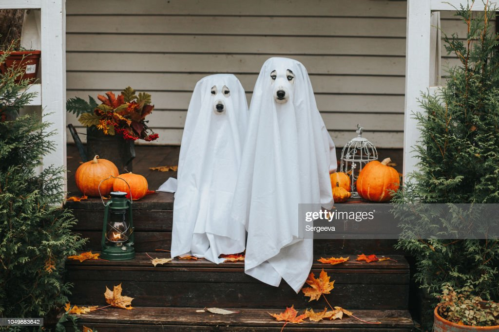 dog ghost for halloween : Stock Photo