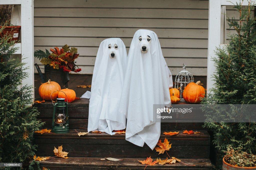 fantasma de perro para halloween : Foto de stock