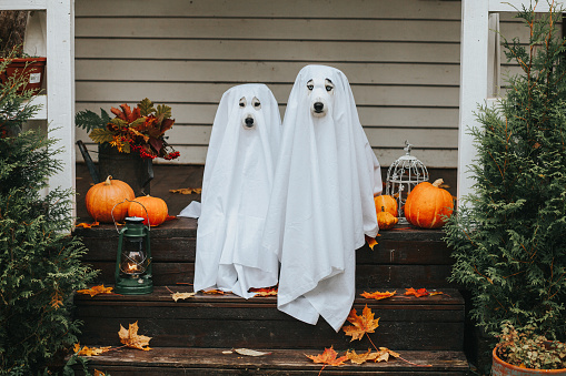 dog ghost for halloween 1049883642