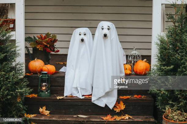 dog ghost for halloween - happy halloween stock photos and pictures