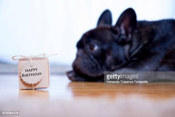 Dog gives a small cardboard box with happy birthday