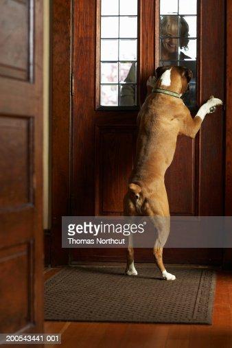 Dog Greeting Mature Woman At Front Door Woman Smiling -9339
