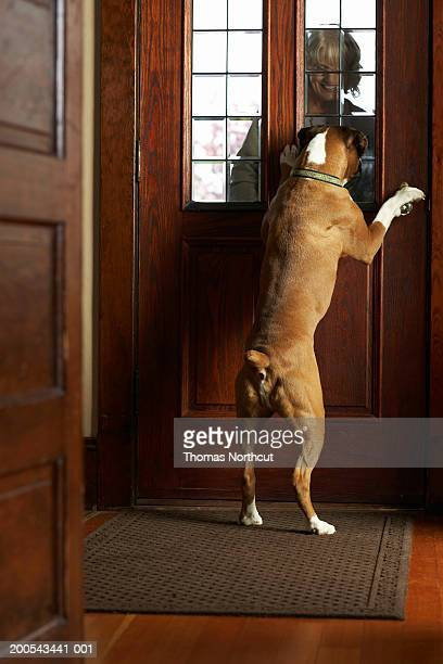 Dog greeting mature woman at front door, woman smiling