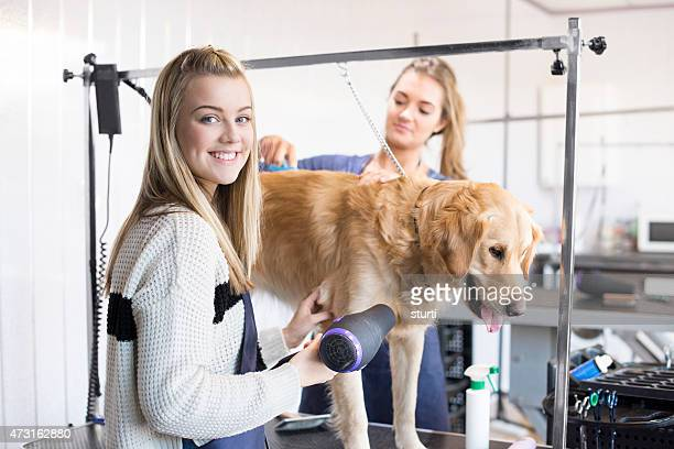 dog groomer portrait - pet grooming salon stock pictures, royalty-free photos & images