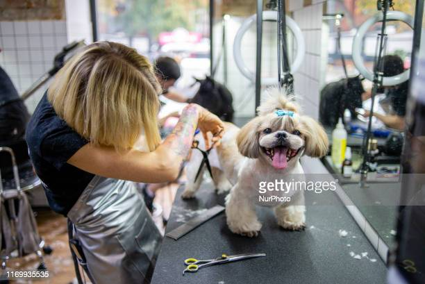 Dog grooming session at the Barber Pet grooming salon in Kyiv, Ukraine, on September 19, 2019.