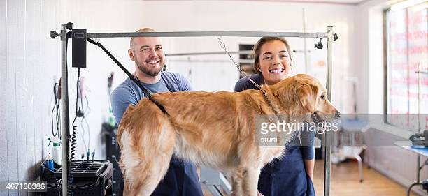 dog grooming team with golden retriever - pet grooming salon stock pictures, royalty-free photos & images