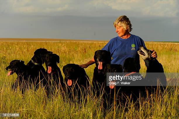 Dog handler Ann Wichmann gathers her dogs for a portrait in a fiels at her home and training facility Jenner's Run in Otis CO Thursday July 28 2011...