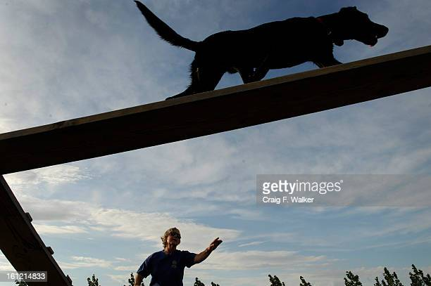 Dog handler Ann Wichmann works with Thunder on the agility course at her home and training facility Jenner's Run in Otis CO Thursday July 28 2011 The...