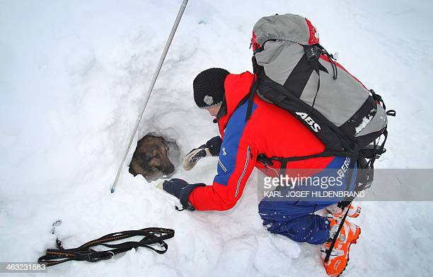 Dog handler Franz Schreiber helps avalanche dog Aico to find a person buried by snow during a training on January 17 2013 near the Alpspitze mountain...