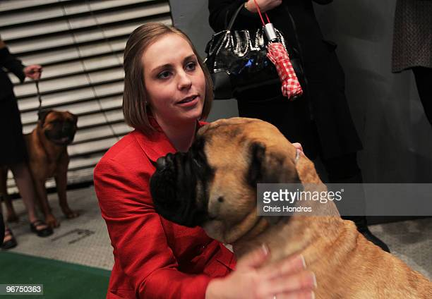 Dog handler Kellye Weymouth of St John Massachusetts holds on to High Points Tailor Made a Bull Mastiff just before competition at the Westminster...