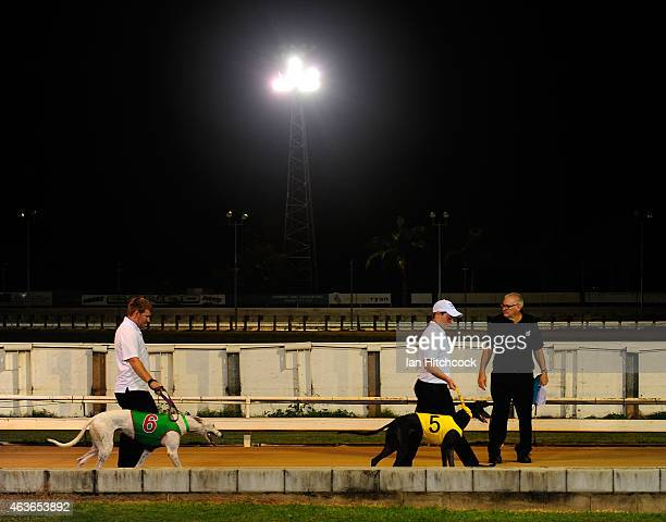 Dog handlers are seen walking greyhounds before the start of a race at the Townsville Showgrounds during a Greyhound Race meeting on February 17 2015...