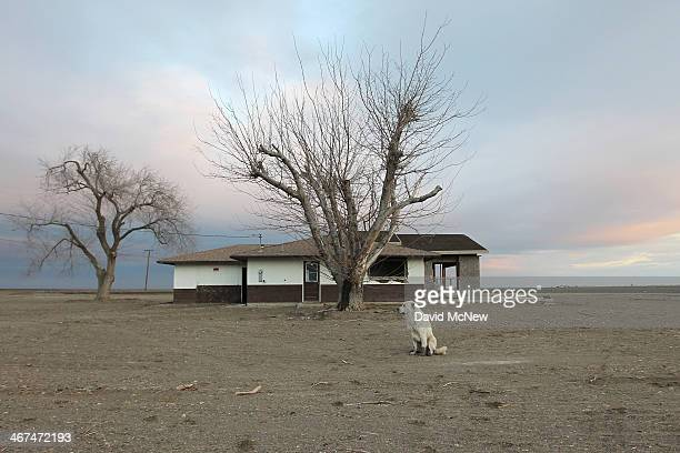 A dog hangs around an abandoned farmhouse on February 6 2014 near Bakersfield California Now in its third straight year of unprecedented drought...