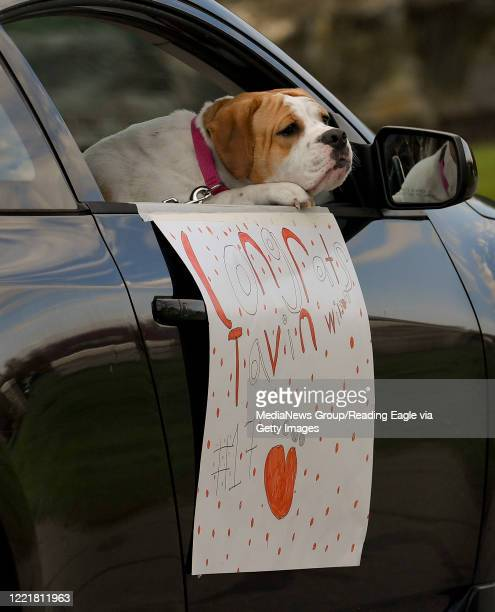 """Dog hangs it's head out the window of a car with a sign that read's """"Congratulations Tavin"""" during a parade for the Wilson High School boys and girls..."""