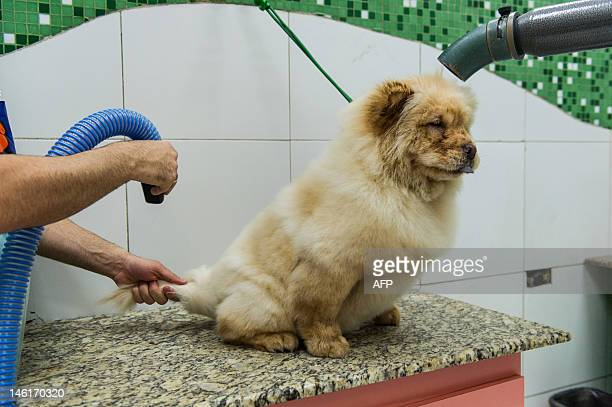 A dog has its hair dried at a pet shop in Sao Paulo Brazil on June 9 2012 AFP PHOTO/Yasuyoshi CHIBA