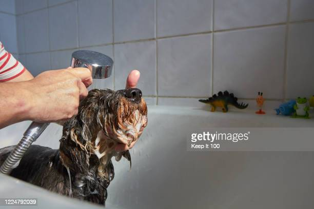 dog having a bath - washing stock pictures, royalty-free photos & images
