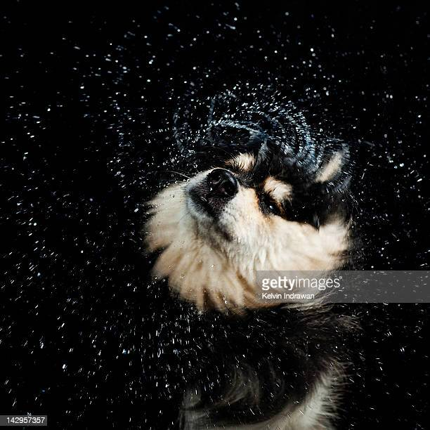 Dog having bath in water