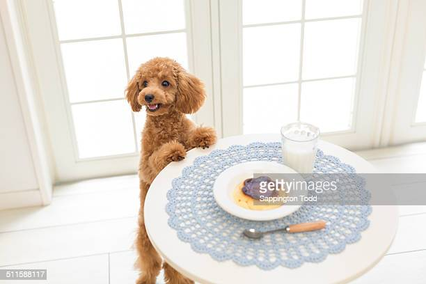 Dog Having Breakfast