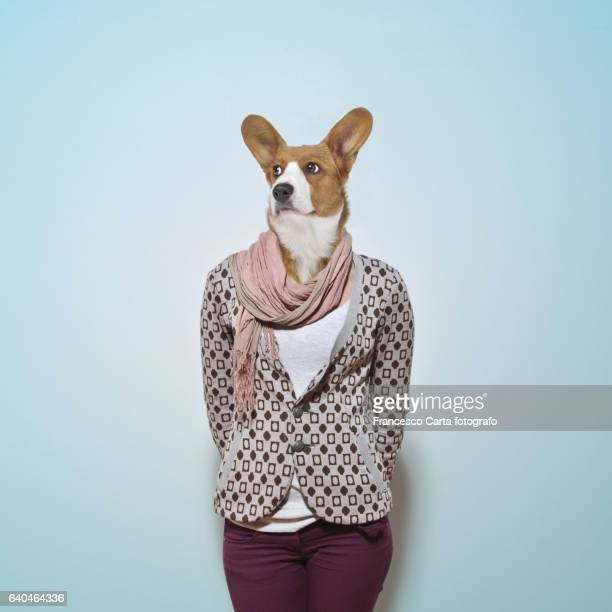 dog head - animals and people stock pictures, royalty-free photos & images