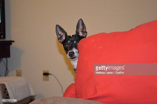 Dog Hiding Behind Pillow