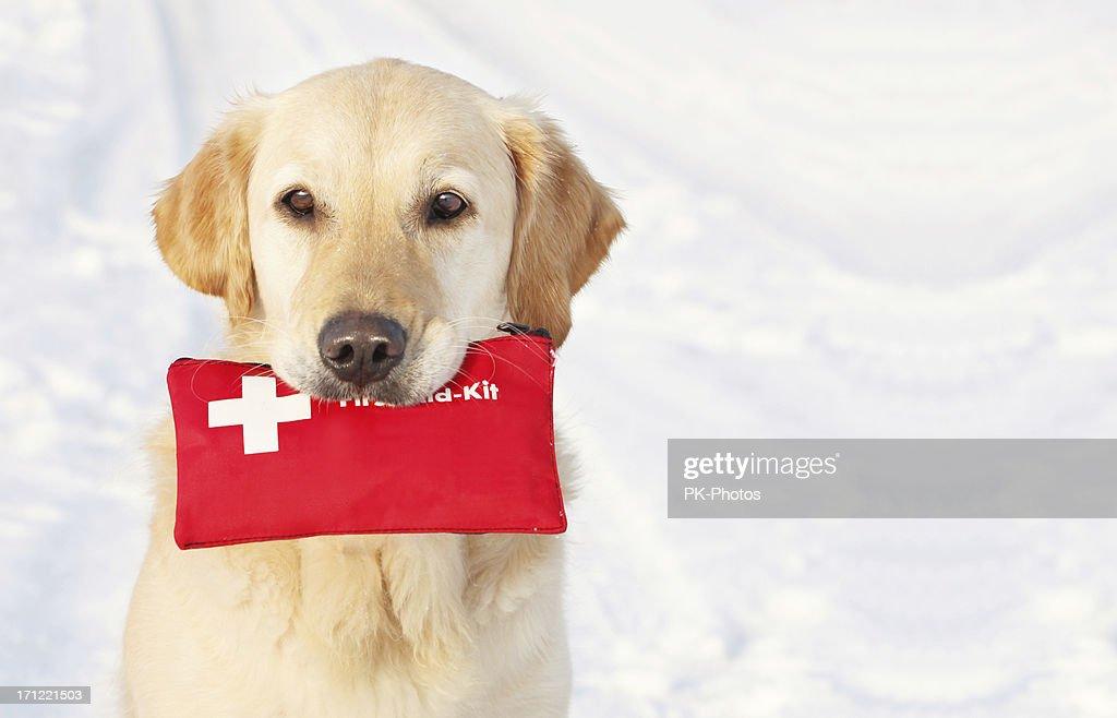 Perro sosteniendo Kit de primeros auxilios : Foto de stock