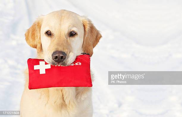 dog holding first-aid-kit - first aid kit stock pictures, royalty-free photos & images