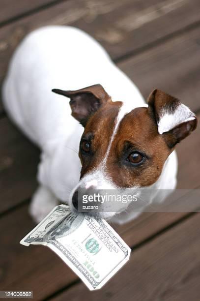 Hund Holding Geld