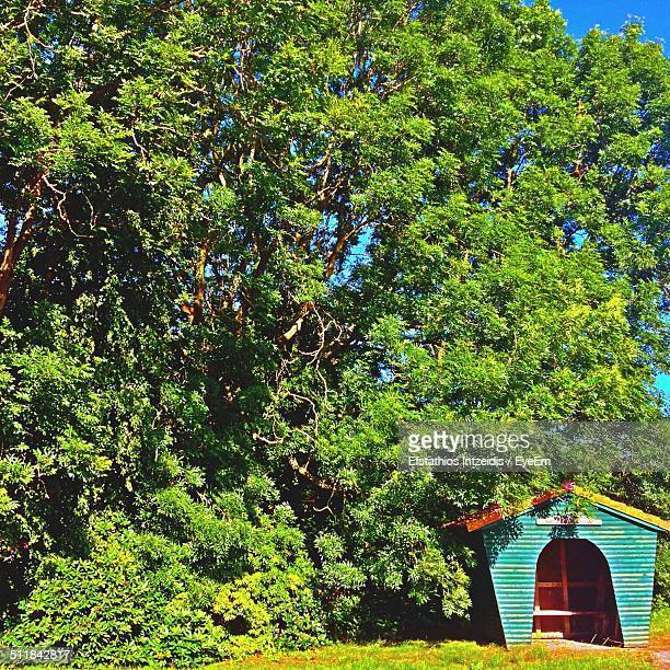 Dog house by tree