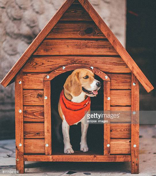 dog house - ignoring stock pictures, royalty-free photos & images