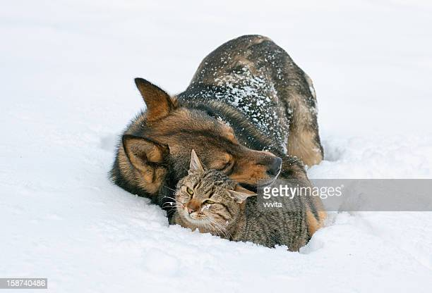 Dog hugging cat in the snow