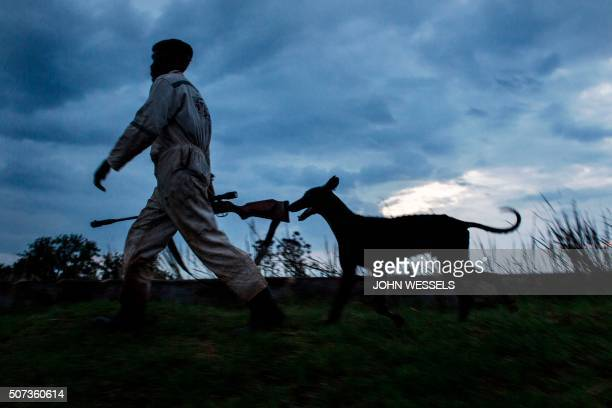 Dog hunter Modupi and his dog Swarti are pictured on their way home as the light turns bad after a day of hunting for rabbit jackals and guinea fowls...