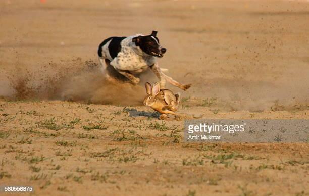 dog hunting - ウサギ肉 ストックフォトと画像