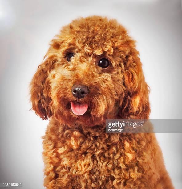 image de chien avec le filtre de photo d'art - cavalier king charles spaniel photos et images de collection