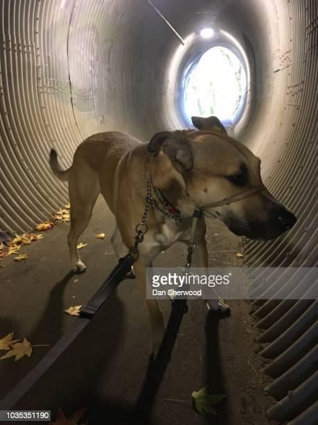Dog in a Culvert Tunnel