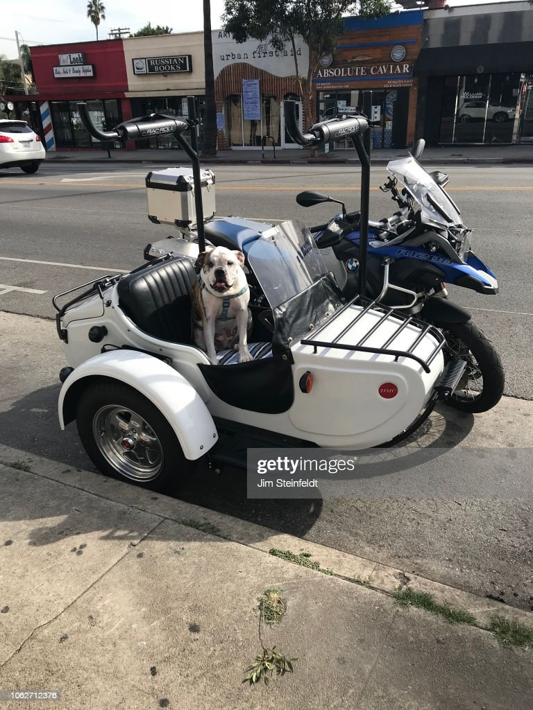 Dog in a motorcycle sidecar in Hollywood, California on