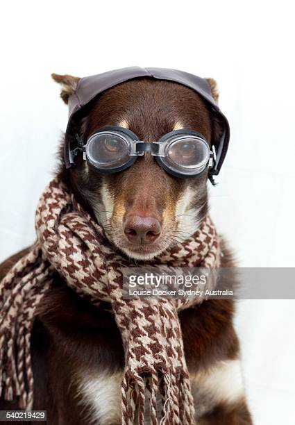 Dog in a old pilot outfit