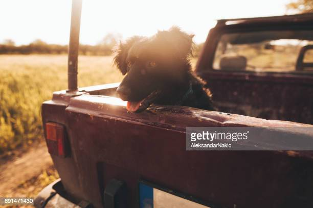Dog in a pick-up truck